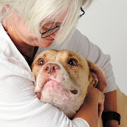 Passion 4 Paws   Vermont Dog Rescue   Adopt a Dog & Save a Life