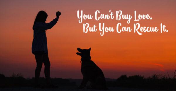 Dog Adoption Fees
