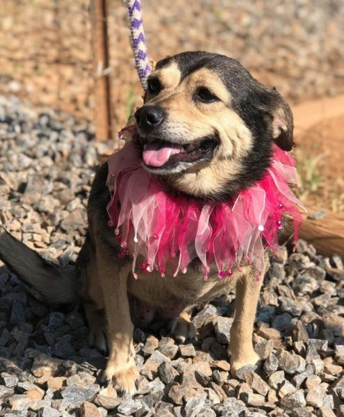 Dogs Available for Adoption | Puppies, Young Dogs, Adult Dogs & Seniors