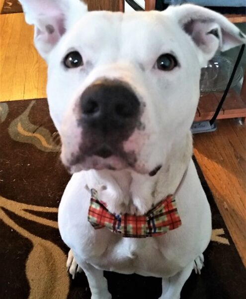 Passion 4 Paws | Vermont Dog Rescue | Adopt a Dog & Save a Life
